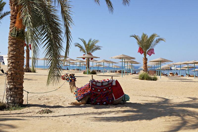Hurghada ab 405 € 1