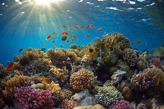 Hotel Jen Male Maldives Landschaft