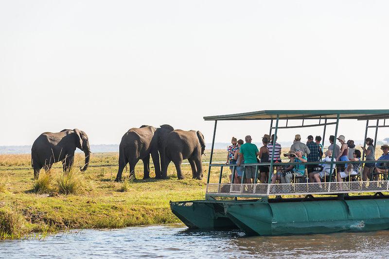 aha Chobe Marina Lodge Tiere