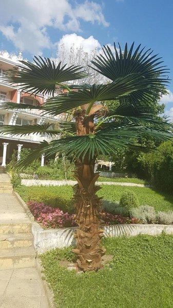 Hotel Elit Palace & Spa Garten