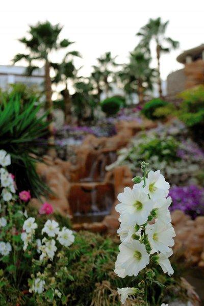 Renaissance Sharm El Sheikh Golden View Beach Resort Landschaft